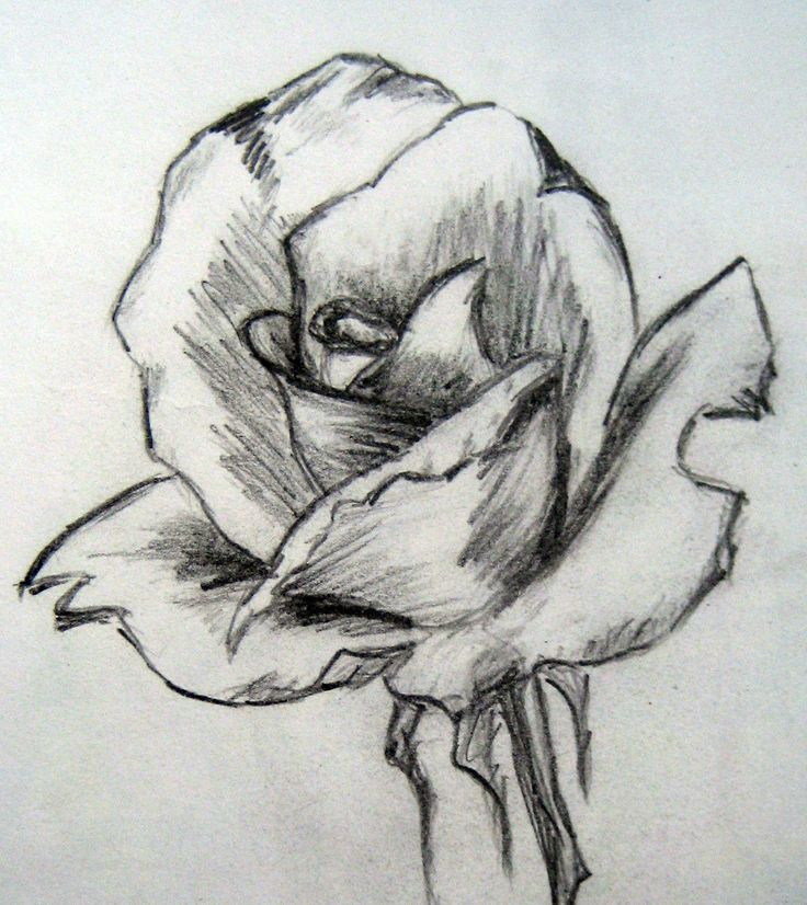Drawn pencil drawing To Pinterest  Com: on