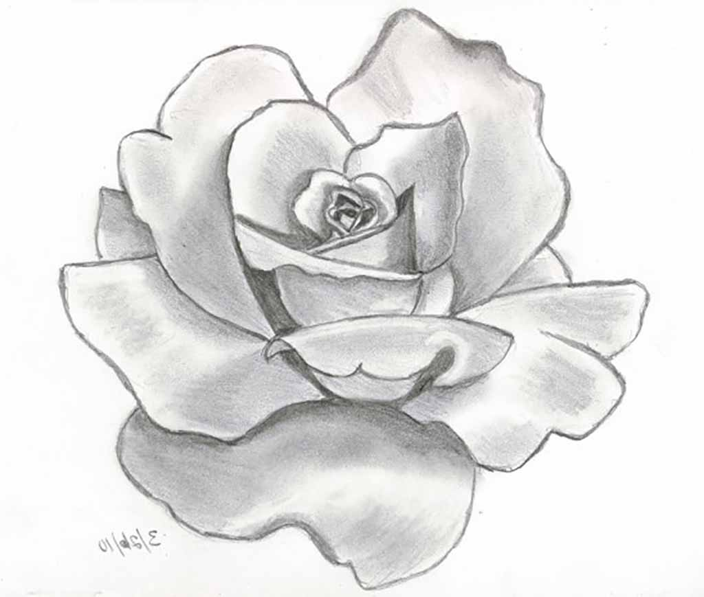 Drawn rose bush color shading Best With Flower Sketch Ideas