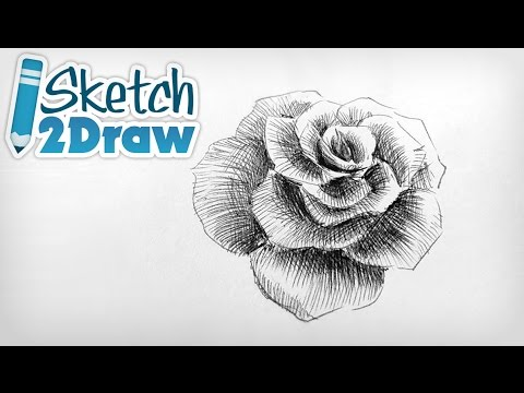 Drawn rose ballpoint pen Point Doodling a Pen with