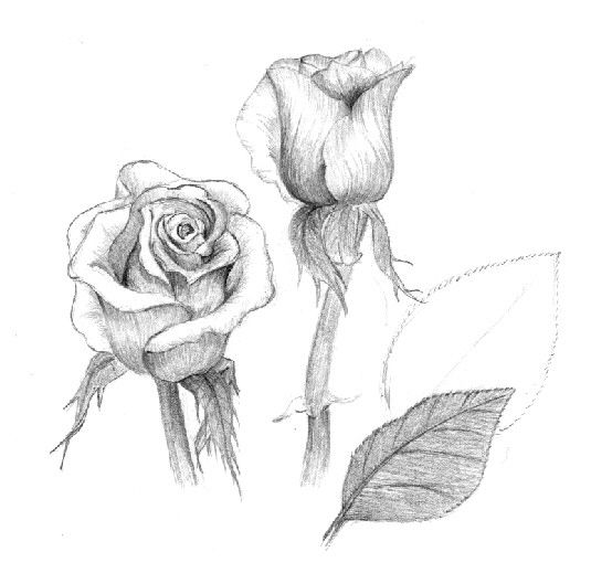 Drawn rose ballpoint pen Images Painting best Pencil To