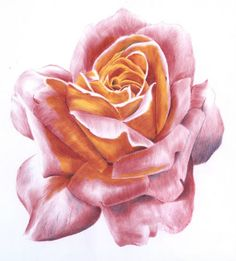 Drawn rose ballpoint pen (thorntonartist) Thornton Thornton yellow drawn