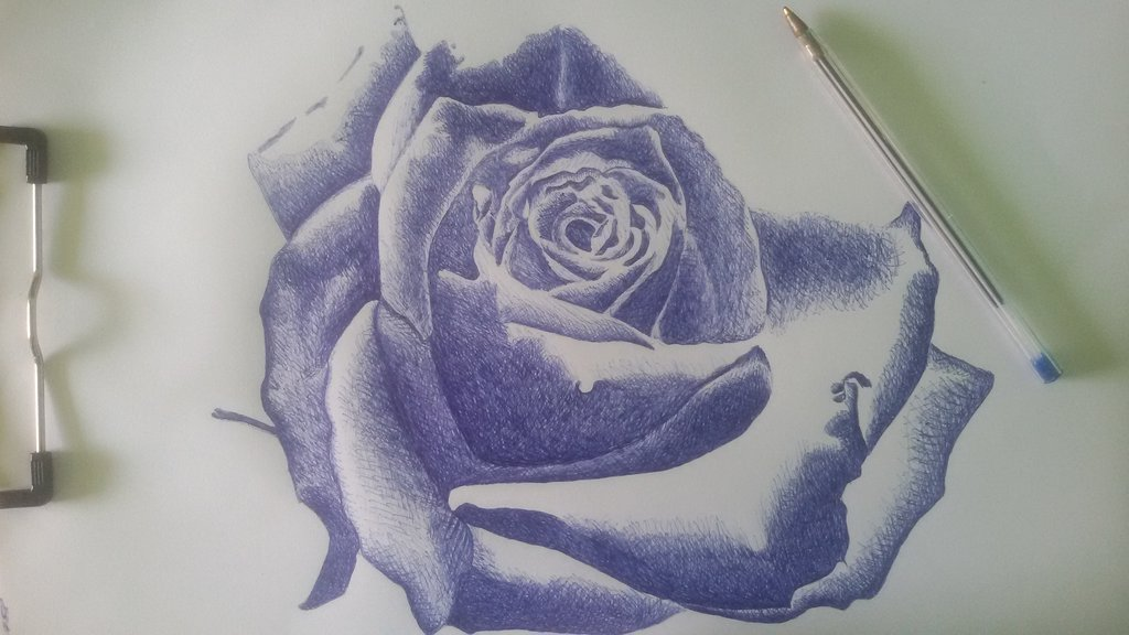 Drawn rose ballpoint pen Tialertran Ballpoint Pen art Rose