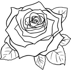 Drawn rose basic By roses draw flowers line