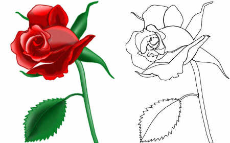 Drawn red rose realistic Draw Draw drawing blood To