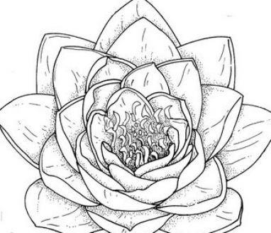 Drawn rose beginner Flower For 25+ Flowers draw