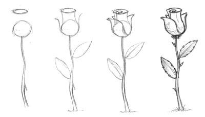 Drawn rose beginner Roses roses draw roses by