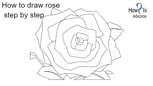 Drawn rose beginner Bloom Rose For Full Beginners