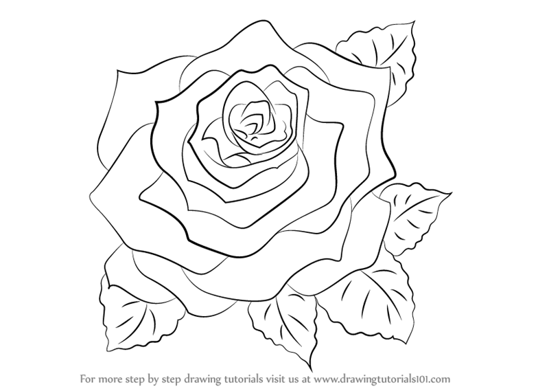 Drawn rose beginner By to  Step a
