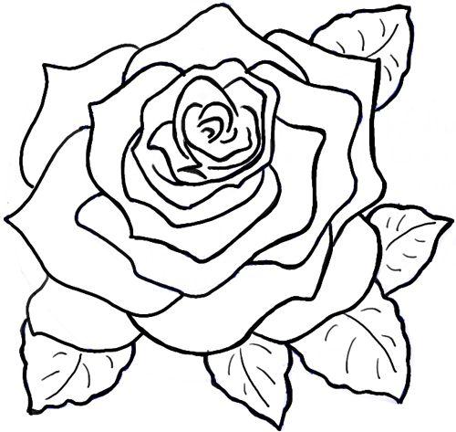 Drawn rose big rose Step Tutorial to Step to