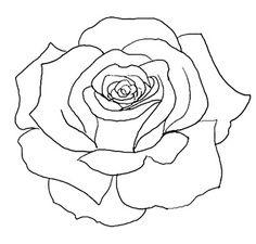 Drawn rose big rose Rose Sharing! Flickr like Photo