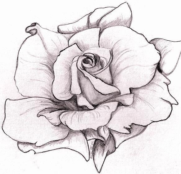 Drawn rose big rose On Best tattoos Rose Pinterest