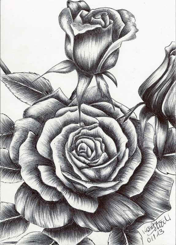 Drawn rose biro Drawing Drawing Rose Kerstin The