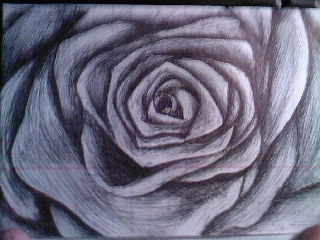 Drawn rose biro Biro AlanaAblaze by Black Rose