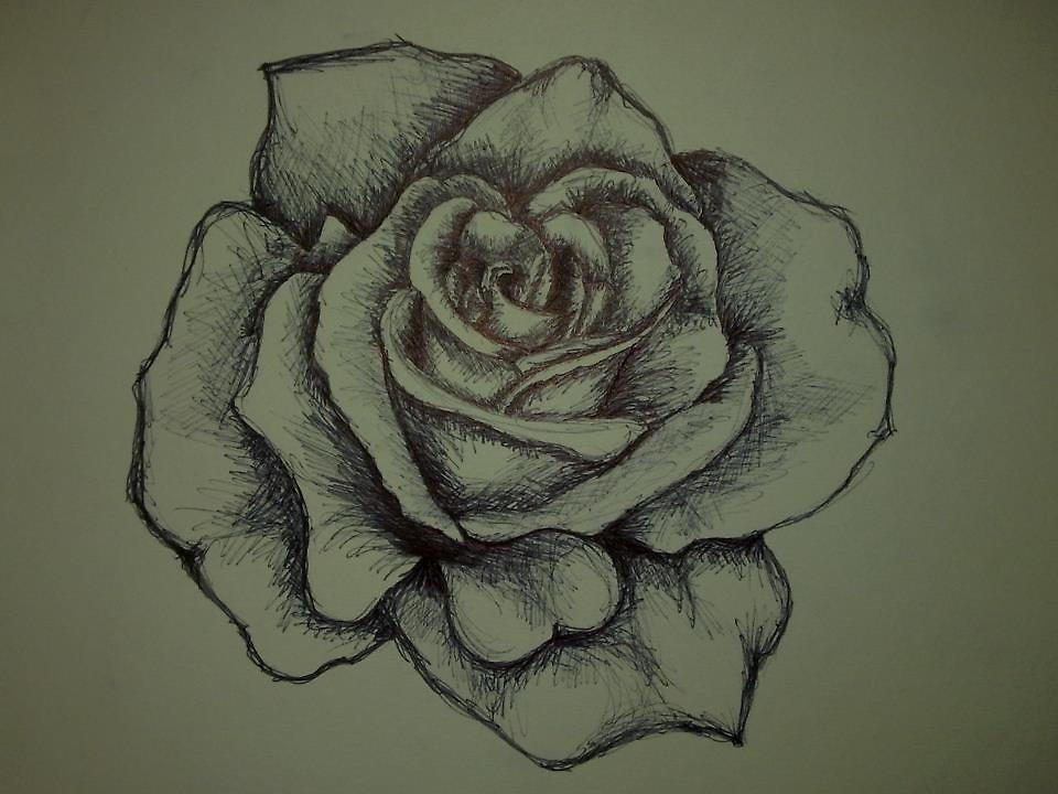 Drawn rose biro Pen KellC by biro rose