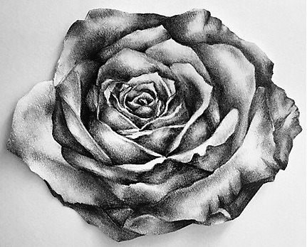 Drawn rose biro Colour ajrogersx Water of by