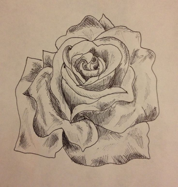 Drawn rose biro Drawing artwork Drawing a 1000+