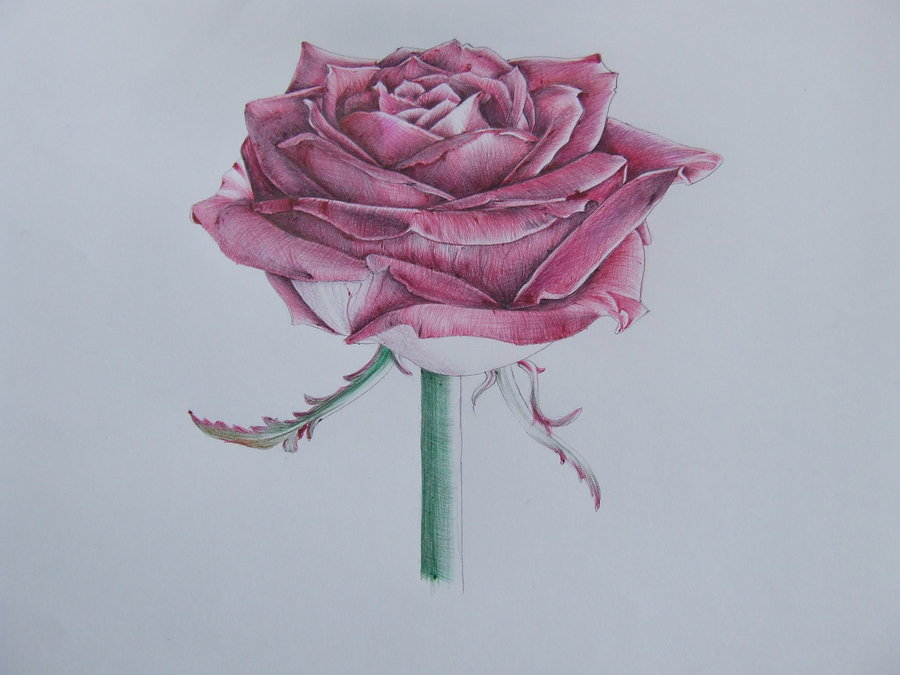 Drawn rose biro Rose DeviantArt angelfaces1986 rose angelfaces1986