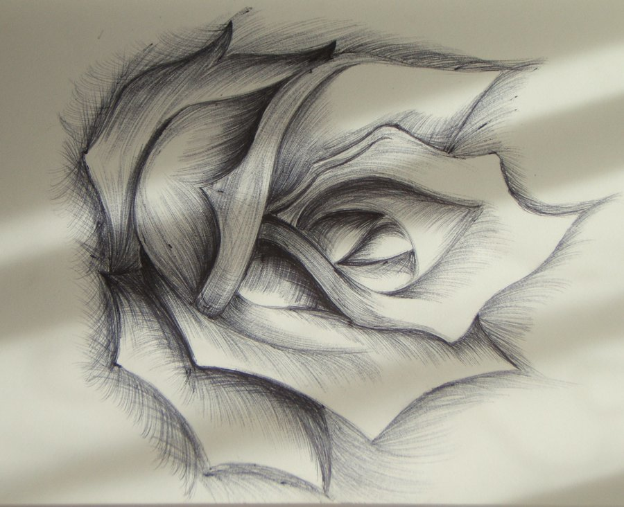 Drawn rose biro Rose DeviantArt FirstyKylling Rose FirstyKylling