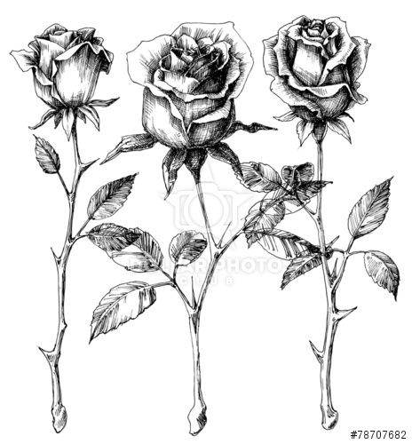 Drawn rose black and white Drawing ideas Best Rose Pinterest