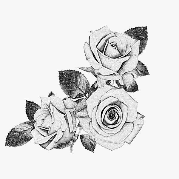 Drawn rose black gray rose · Tattoo Drawing Rose white