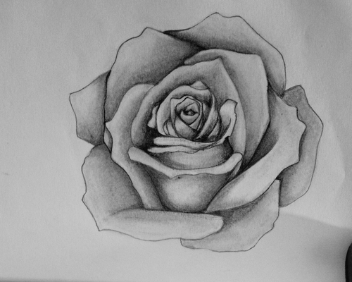 Drawn rose black gray rose Drawing drawing rose deviantart lá