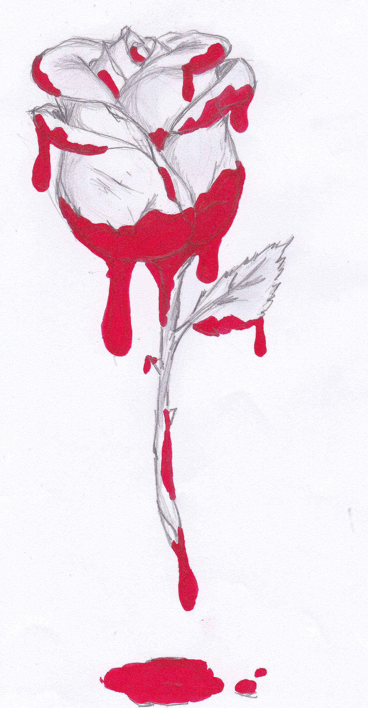 Drawn rose bleeding rose A Bleeding person A rose