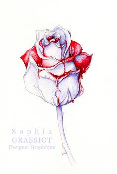 Drawn rose blood dripping Blood A Search dripping Love