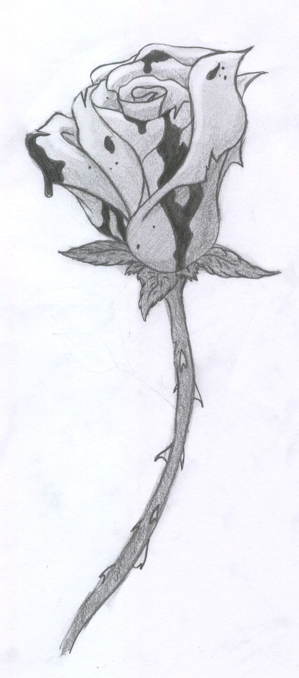 Drawn rose blood dripping Rose Rose dongetrabi: Black Drawing