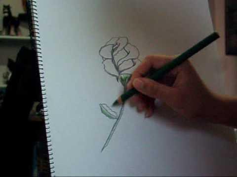 Drawn rose blooming rose Speed Speed Rose Blooming Blooming