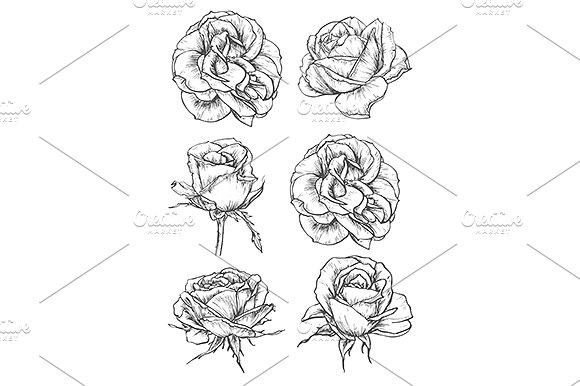 Drawn rose blooming rose On Blooming Blooming ~ sketches