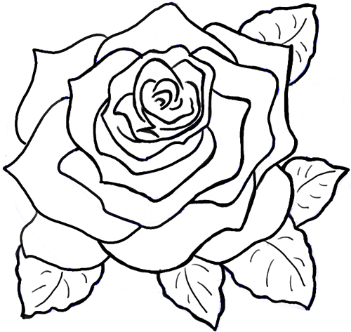 Drawn rose blooming rose Draw to by Roses Opening