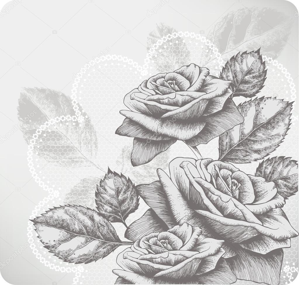 Drawn rose blooming rose Blooming with Vector roses and