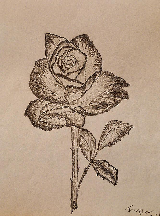 Drawn rose blooming rose Drawing by Tica Sketch Blooming