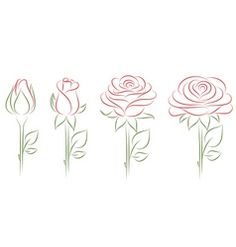 Drawn rose blooming rose Decor drawings blooming Drawing vector