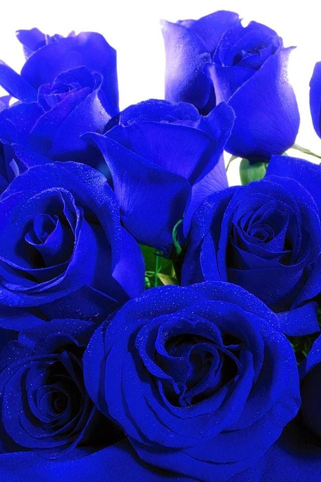 Drawn rose blue rose Roses I'm 25+ ideas can