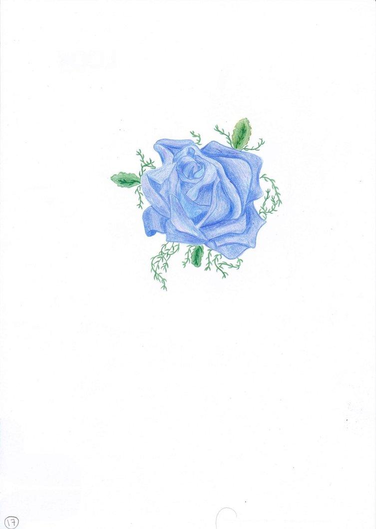 Drawn rose blue rose By Iheartart172012 Iheartart172012 on DeviantArt