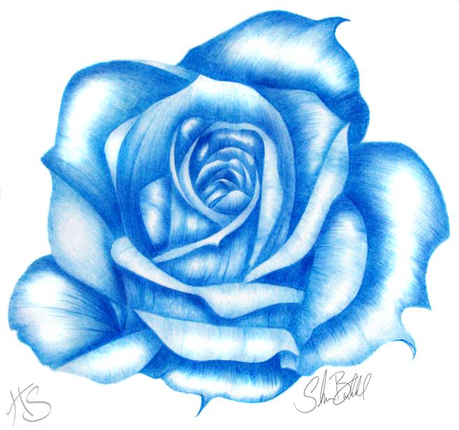 Drawn rose blue rose Blue deviantART Miss deviantART Blue