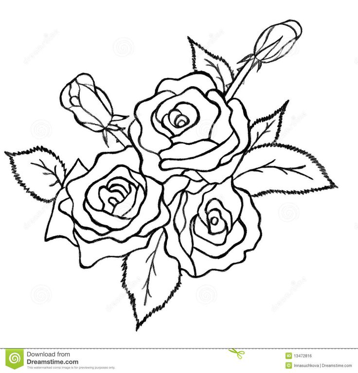 Drawn rose bunch rose Images best sketch white 252