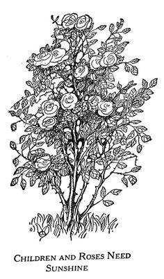 Drawn rose bush #2