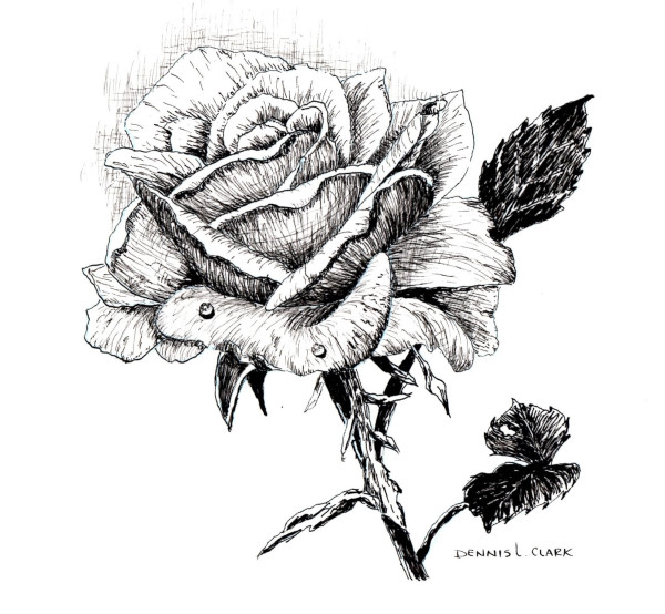 Drawn rose pen drawing A Pen and Lessons Ink
