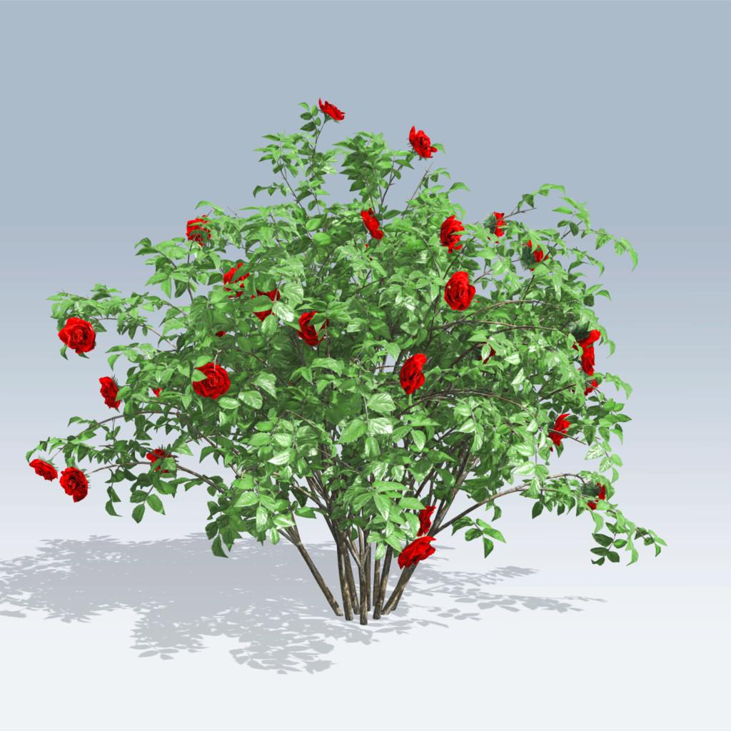 Drawn rose bush #3