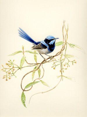 Drawn rose bush australian bird Pinterest Find more Pin 25+