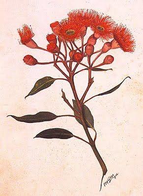 Drawn rose bush australian native plant Pin Native images Native and