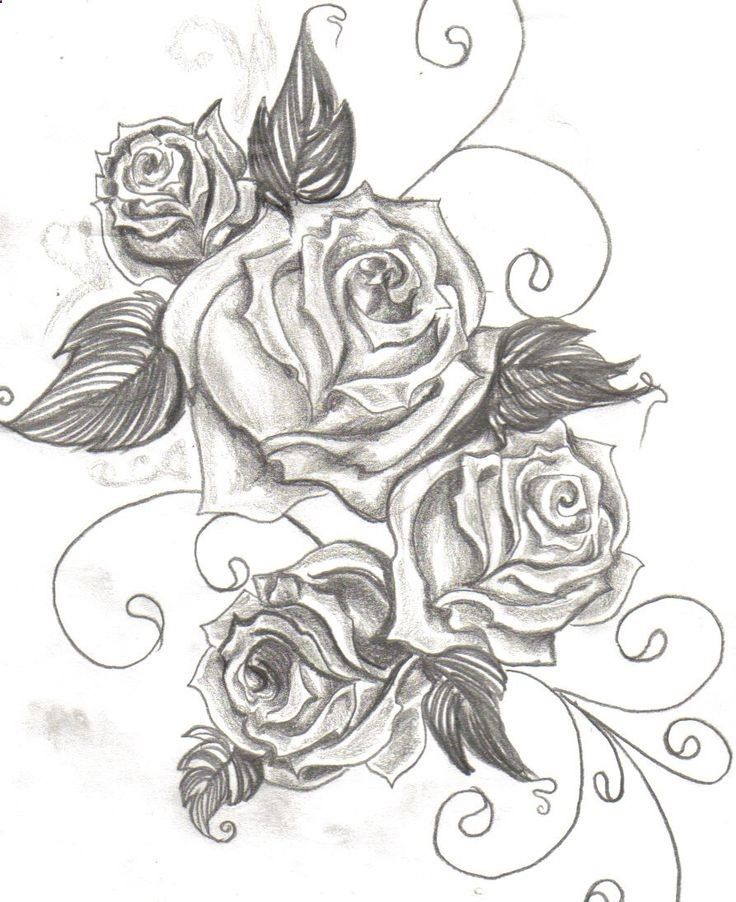 Drawn rose bush beautiful flower Curse and reminder rose images