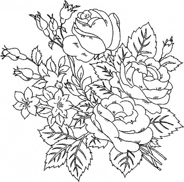 Drawn rose bush beautiful flower NetArt Roses Page Roses Coloring