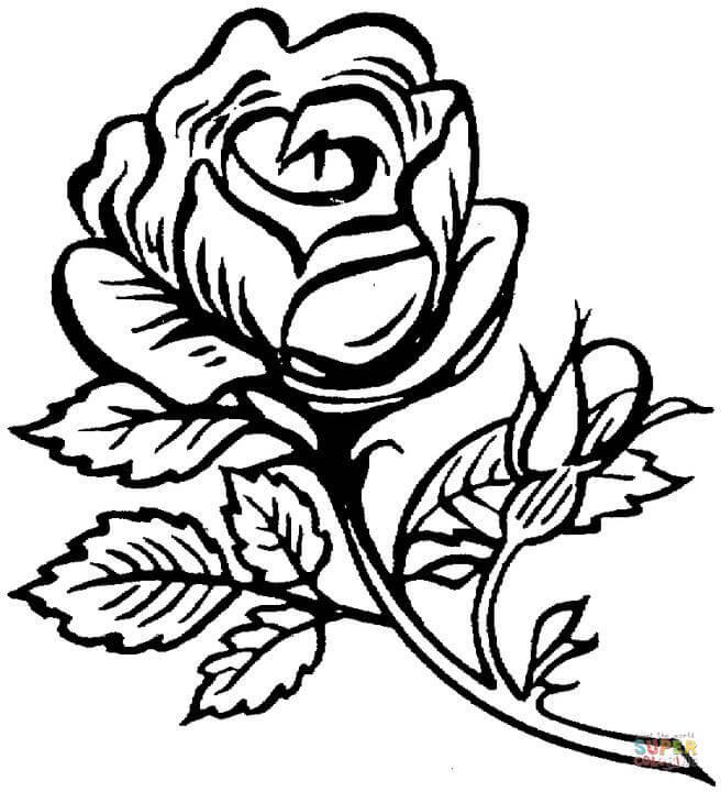 Drawn rose bush big rose Roses big Coloring coloring pages