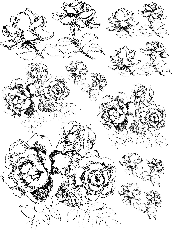 Drawn rose bush black gray rose Rose Bush Spr Drawing Rose