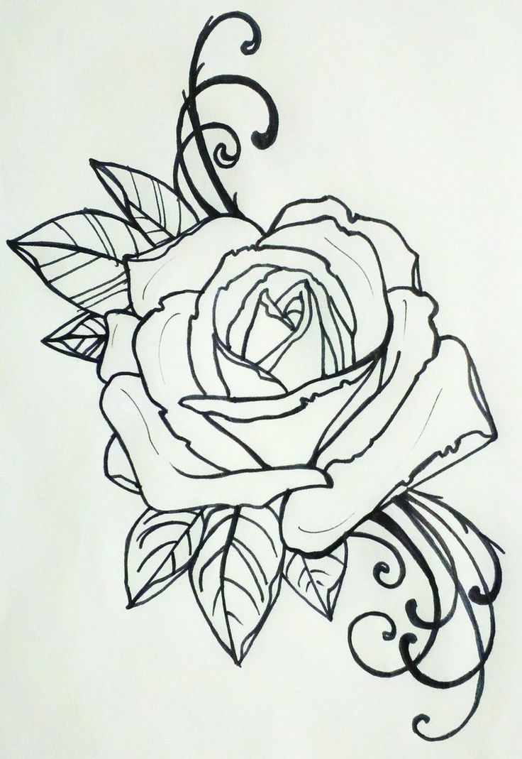 Drawn rose bush black gray rose Images tattoo Neo best Traditional