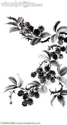 Drawn rose bush blackberry  blackberry on a fell