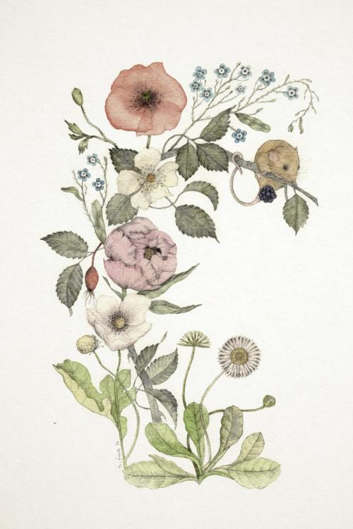 Drawn rose bush blackberry Flowers rose artist Daisy peony